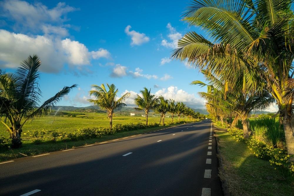 Road Trip Mauritius palmiers Sud LexpressCars.mu